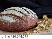 Булка свежего хлеба. Стоковое фото, фотограф Александр Палехов / Фотобанк Лори