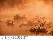 Snags in the river water in early winter morning, фото № 26352211, снято 19 января 2017 г. (c) Serg Zastavkin / Фотобанк Лори