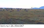 Купить «group of herbivore animals in savanna at africa», видеоролик № 26354047, снято 15 апреля 2017 г. (c) Syda Productions / Фотобанк Лори