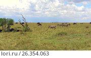 Купить «group of herbivore animals in savanna at africa», видеоролик № 26354063, снято 22 марта 2017 г. (c) Syda Productions / Фотобанк Лори