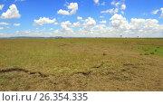 herbivore animals grazing in savanna at africa. Стоковое видео, видеограф Syda Productions / Фотобанк Лори