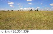 Купить «herbivore animals grazing in savanna at africa», видеоролик № 26354339, снято 22 марта 2017 г. (c) Syda Productions / Фотобанк Лори