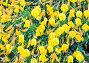 Yellow flowers background, фото № 26359347, снято 21 мая 2016 г. (c) Юрий Брыкайло / Фотобанк Лори