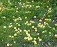 Яблоки лежат на зеленой траве в саду, фото № 26359963, снято 14 октября 2011 г. (c) Дудакова / Фотобанк Лори