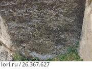 Купить «Petroglyphs made by primeval man. Gobustan national park. Azerbaijan», фото № 26367627, снято 26 апреля 2017 г. (c) Аркадий Захаров / Фотобанк Лори