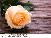 Свежая кремовая роза на деревянном фоне. Стоковое фото, фотограф Елена Руй / Фотобанк Лори