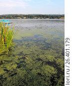 Купить «Lake Kemnade in summer 2016, grow rampant of Western waterweed and duckweeds, Germany, North Rhine-Westphalia, Ruhr Area, Bochum», фото № 26401179, снято 26 августа 2016 г. (c) age Fotostock / Фотобанк Лори