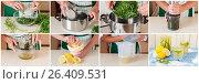 A Step by Step Collage of Making Tarragon Lemonade. Стоковое фото, фотограф Татьяна Ворона / Фотобанк Лори