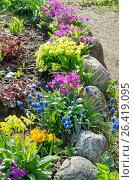 Купить «Клумба с весенними цветами», фото № 26419095, снято 27 мая 2017 г. (c) Елена Коромыслова / Фотобанк Лори