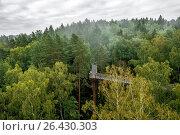 Купить «Тропа через лес. Аникщяй, Литва», фото № 26430303, снято 24 января 2018 г. (c) Geraldas Galinauskas / Фотобанк Лори