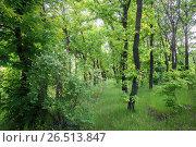 Купить «Лиственный лес летом», фото № 26513847, снято 21 мая 2017 г. (c) виктор химич / Фотобанк Лори