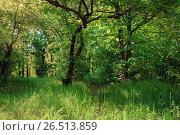 Купить «Лиственный лес летом», фото № 26513859, снято 21 мая 2017 г. (c) виктор химич / Фотобанк Лори