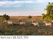 Купить «zebras herd grazing in savannah at africa», фото № 26521151, снято 18 февраля 2017 г. (c) Syda Productions / Фотобанк Лори