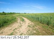 Купить «Сельский пейзаж с дорогой вдоль злакового поля», эксклюзивное фото № 26542207, снято 28 июня 2016 г. (c) Елена Коромыслова / Фотобанк Лори