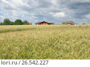 Купить «Летний сельский пейзаж с полем ржи», эксклюзивное фото № 26542227, снято 9 июля 2016 г. (c) Елена Коромыслова / Фотобанк Лори
