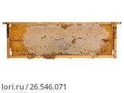 Деревянная рамка с пчелиными сотами. Стоковое фото, фотограф V.Ivantsov / Фотобанк Лори