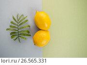 Купить «Два спелых лимона и лист тропического растения на светлом сине-зелено фоне (фуд-фотография).», фото № 26565331, снято 19 июля 2019 г. (c) Olesya Tseytlin / Фотобанк Лори