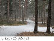 Купить «landscape of winter forest and snow», фото № 26565483, снято 1 апреля 2012 г. (c) Tatjana Romanova / Фотобанк Лори