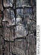 the texture of the burnt tree. Стоковое фото, фотограф Tatjana Romanova / Фотобанк Лори