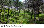 Купить «El Torrent de la Cabana small mountain stream with crystal clear water», видеоролик № 26574631, снято 16 мая 2017 г. (c) Яков Филимонов / Фотобанк Лори