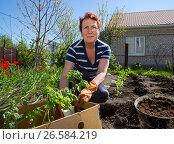 Купить «Пожилая женщина занимается высадкой растений», эксклюзивное фото № 26584219, снято 4 мая 2017 г. (c) Вячеслав Палес / Фотобанк Лори
