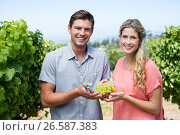 Купить «Portrait of happy couple holding grapes and pruning shears at vineyard», фото № 26587383, снято 31 января 2017 г. (c) Wavebreak Media / Фотобанк Лори
