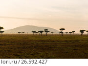 Купить «acacia trees in savannah at africa», фото № 26592427, снято 21 февраля 2017 г. (c) Syda Productions / Фотобанк Лори