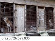 """Купить «Собаки в приюте для бездомных животных благотворительного фонда """"Верность"""" под Санкт-Петербургом», фото № 26599835, снято 30 июня 2017 г. (c) Stockphoto / Фотобанк Лори"""