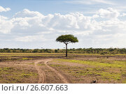 Купить «acacia tree in savannah at africa», фото № 26607663, снято 19 февраля 2017 г. (c) Syda Productions / Фотобанк Лори