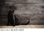 Купить «balck cat on dark wooden background», фото № 26631823, снято 28 сентября 2016 г. (c) Майя Крученкова / Фотобанк Лори