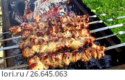 Купить «meat roasting on skewers in brazier outdoors», видеоролик № 26645063, снято 8 июля 2017 г. (c) Syda Productions / Фотобанк Лори