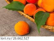 Купить «Apricots with leaves on old wooden table», фото № 26662527, снято 11 июля 2013 г. (c) Олег Жуков / Фотобанк Лори