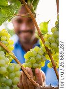 Купить «Close-up of man touching grapes», фото № 26669287, снято 16 февраля 2016 г. (c) Wavebreak Media / Фотобанк Лори