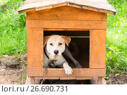 Собака в конуре. Стоковое фото, фотограф Александр Щепин / Фотобанк Лори