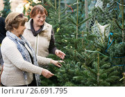 Купить «Happy smiling elderly women selecting spruce», фото № 26691795, снято 4 июля 2020 г. (c) Яков Филимонов / Фотобанк Лори