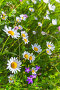 Summer flowers grow on green meadow, фото № 26692219, снято 1 июля 2017 г. (c) Евгений Сергеев / Фотобанк Лори