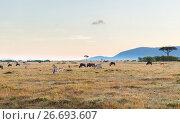 Купить «group of herbivore animals in savannah at africa», фото № 26693607, снято 18 февраля 2017 г. (c) Syda Productions / Фотобанк Лори
