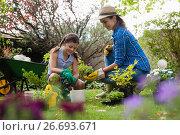Купить «Mother giving seedling to daughter while gardening», фото № 26693671, снято 13 февраля 2017 г. (c) Wavebreak Media / Фотобанк Лори