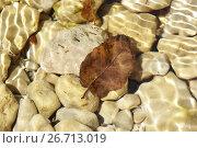 Купить «Каменистое дно и лист в воде», эксклюзивное фото № 26713019, снято 26 июля 2017 г. (c) Яна Королёва / Фотобанк Лори