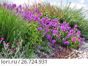 Купить «Клумба с декоративными цветами», фото № 26724931, снято 1 августа 2017 г. (c) Илюхина Наталья / Фотобанк Лори