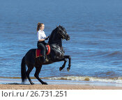 Девушка и вороная лошадь на дыбах на берегу моря. Стоковое фото, фотограф Абрамова Ксения / Фотобанк Лори