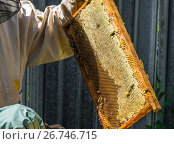 Купить «The beekeeper keeps the wax frame with honey», фото № 26746715, снято 7 августа 2017 г. (c) Володина Ольга / Фотобанк Лори