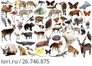 Купить «animal collection asia», фото № 26746875, снято 20 марта 2019 г. (c) Яков Филимонов / Фотобанк Лори