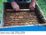Купить «Пчеловод за работой в Уссурийской тайге», эксклюзивное фото № 26753379, снято 9 августа 2017 г. (c) syngach / Фотобанк Лори