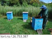 Купить «Пчеловод за работой в Уссурийской тайге», эксклюзивное фото № 26753387, снято 9 августа 2017 г. (c) syngach / Фотобанк Лори