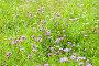 Полевые цветы. Бабочка павлиний глаз сидит на одном из цветков. Солнечный день летом, фото № 26762495, снято 8 августа 2017 г. (c) Екатерина Овсянникова / Фотобанк Лори