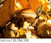Купить «В тени, а красиво», фото № 26766199, снято 30 сентября 2007 г. (c) Игорь Камаев / Фотобанк Лори