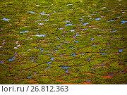 Купить «Marshy area with puddles and sparse vegetation», фото № 26812363, снято 16 августа 2015 г. (c) Сергей Новиков / Фотобанк Лори