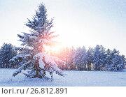 Winter landscape - snowy fir tree in the winter forest under falling snow in winter sunset light, фото № 26812891, снято 27 ноября 2010 г. (c) Зезелина Марина / Фотобанк Лори