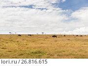 Купить «wildebeests grazing in savannah at africa», фото № 26816615, снято 17 февраля 2017 г. (c) Syda Productions / Фотобанк Лори